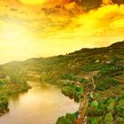 Douro Gold